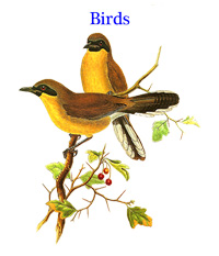 Calendar of bird drawings from John Gould