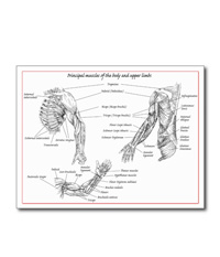Bones of the human lower limb, cards