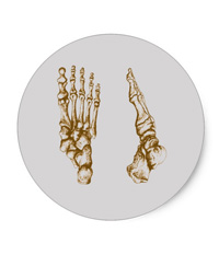 Stickers of bones of the human foot