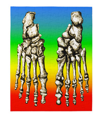Jigsaw puzzles of the bones of the human foot