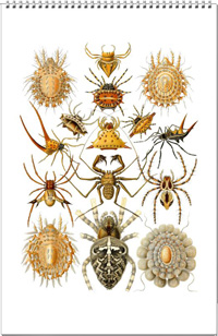 Calendar of spider drawings from the work of Ernst Haeckel